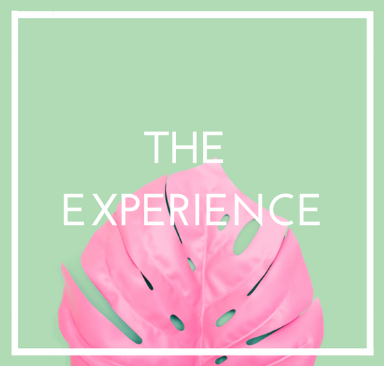 flamingo-experience